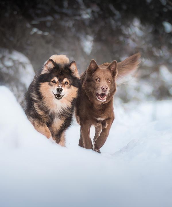 Willi koirat kuva: Ida photos